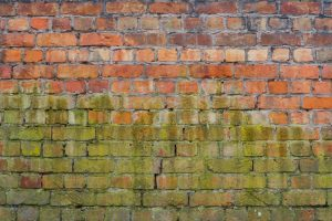 green wet brick, moist and fungus on brick wall, old rough brick texture wall pattern