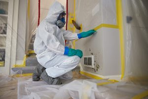 Mold-Remediation-Services-in-Bellevue-NE